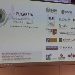 17th EUCARPIA – Capsicum and Eggplant