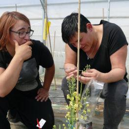 Retour sur les jobs d'un jour réalisés à NOVA GENETIC en 2018